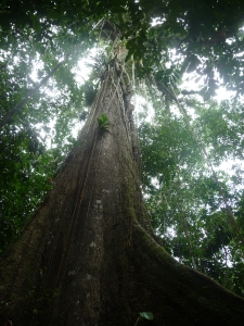 One single hectare of rainforest in Yasuní harbours more tree and insect species than all of the USA and Canada combined.